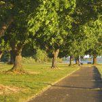 Parki miejskie i ich rola